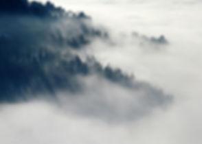 fog and trees.jpg