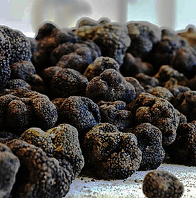 Understand the black truffle