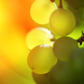 Bordeaux white wines