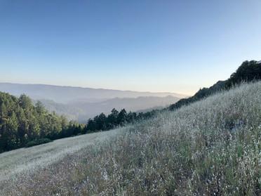 Skyline Ridge Open Space Preserve (2020)