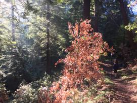Big Sur, Landels-Hill Big Creek Reserve (2018)
