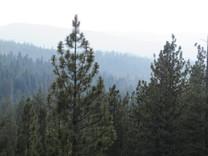 Sagehen Experimental Forest (2018)