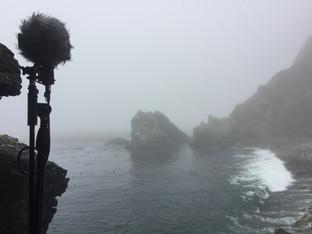 Big Sur, Big Creek Cove (2018)