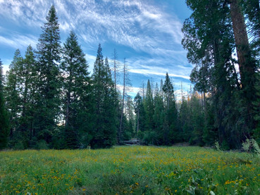 Sequoia National Forest, Trail of 100 Giants (2019)