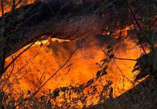 Avanço do desmatamento e da Covid-19 piora imagem do Brasil no exterior, diz estudo  (Revista Globo Rural, 17/07/2020)