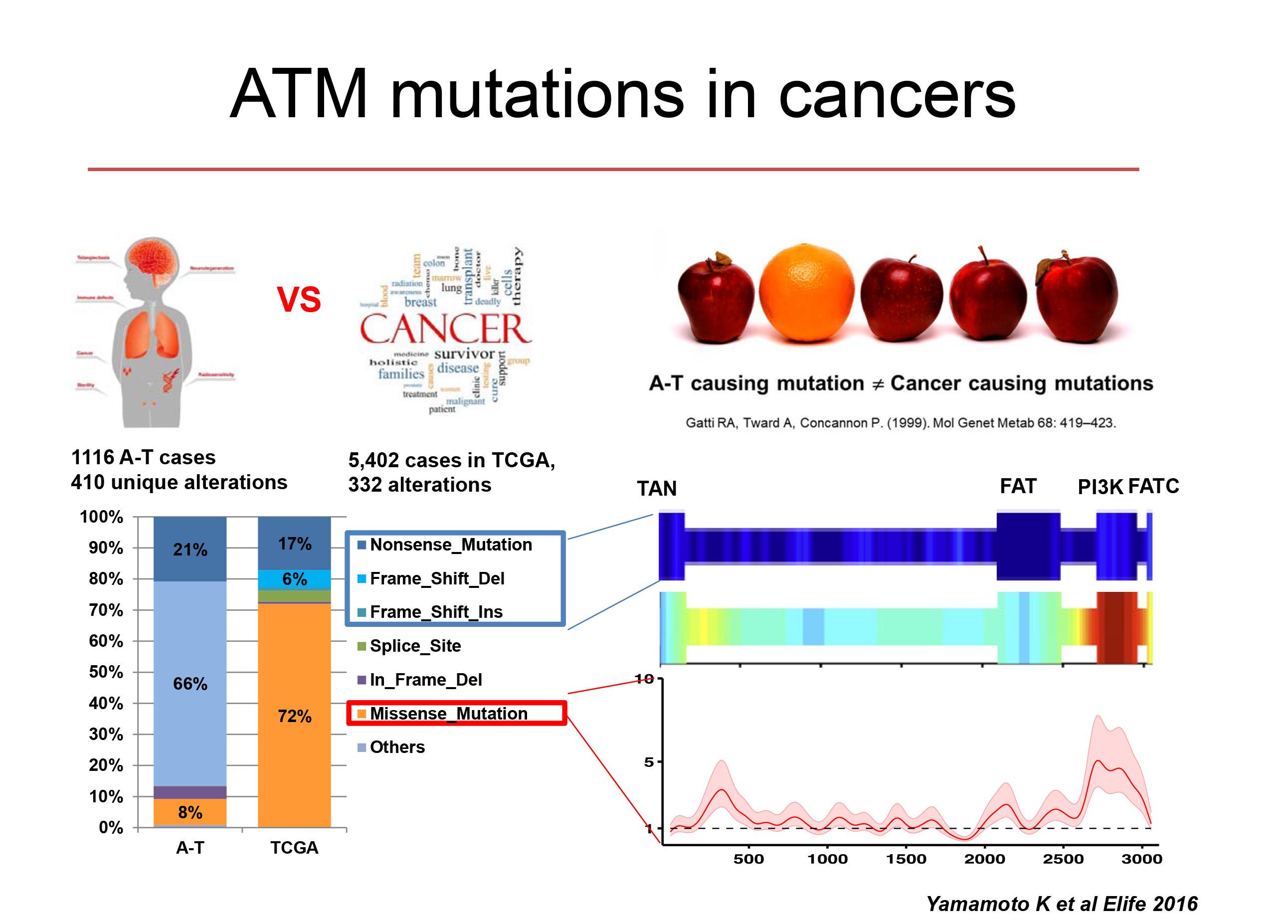 ATM cancer