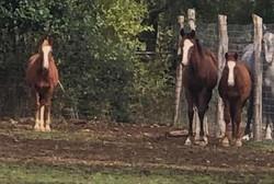 Slack 2018 2019 Foals WB QH