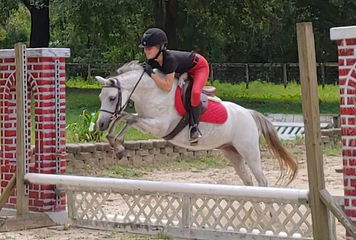 Section B Welsh Pony Gelding For Sale
