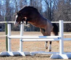 Squishy Free Jump Crop.jpg