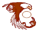 FLFN Logo.jpg