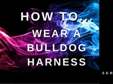 How to… wear a Bulldog Harness