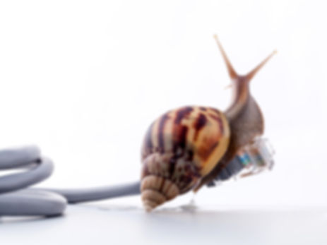 Snail with rj45 connector symbolic photo