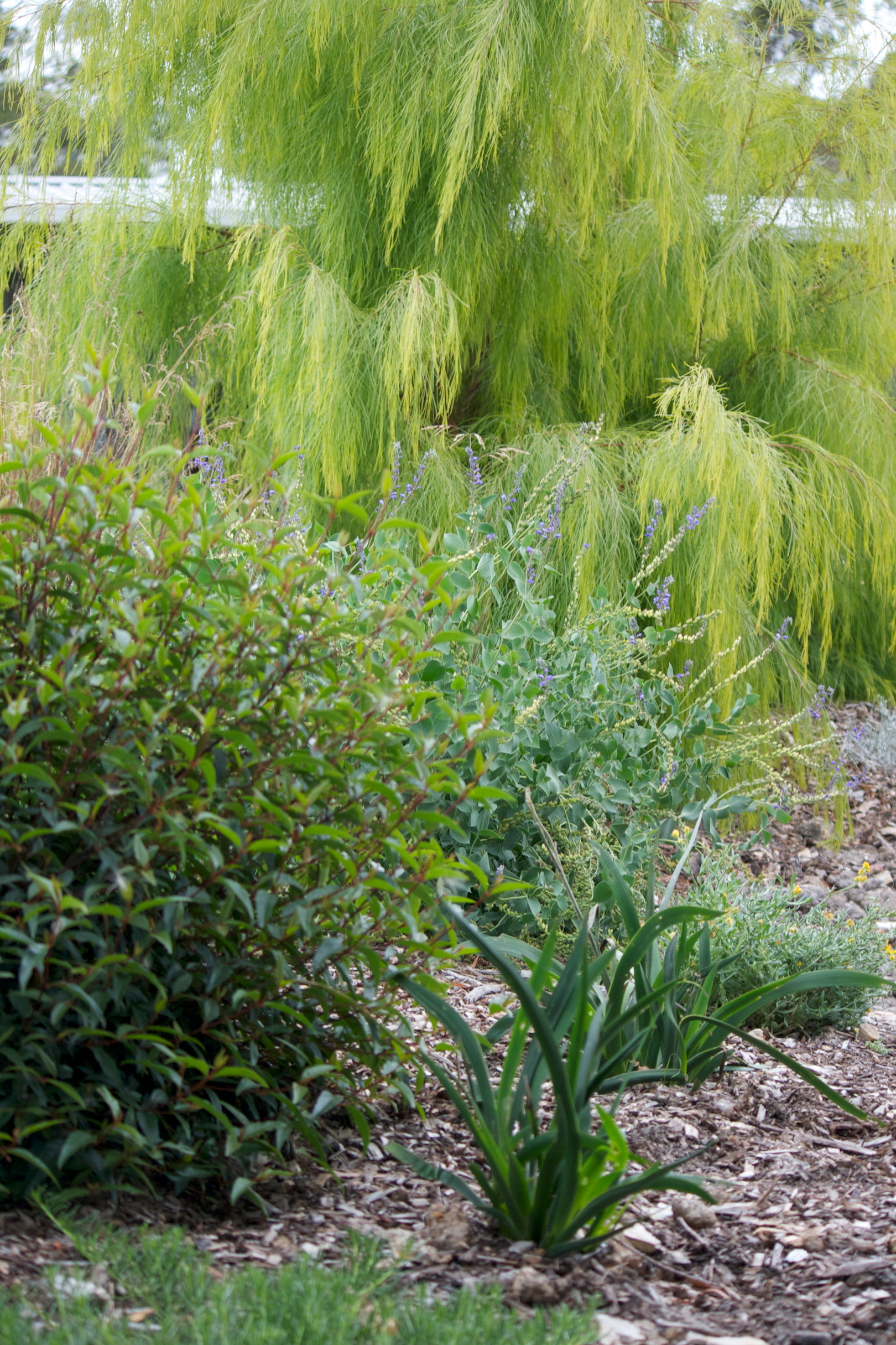 Garden inspiration consult