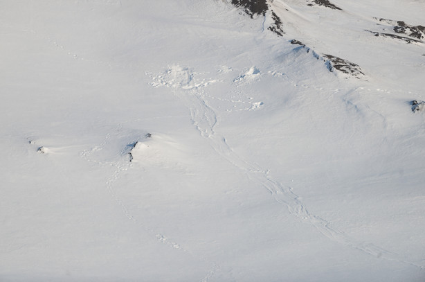 Polar Bear Den