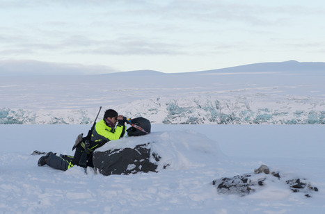 On the Lookout for Polar Bears