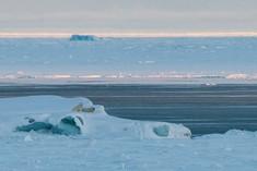 Polar Bear Family on an Iceberg