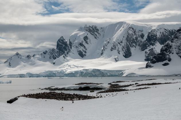 Massive Penguin Colony