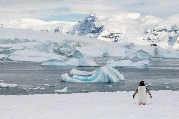 Penguin, Icebergs, and Mountains