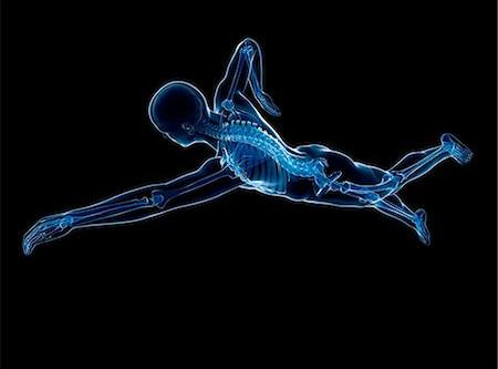الجزء 1/2: التمارين الأرضية في السباحة           الجزء العلوي من الجسم