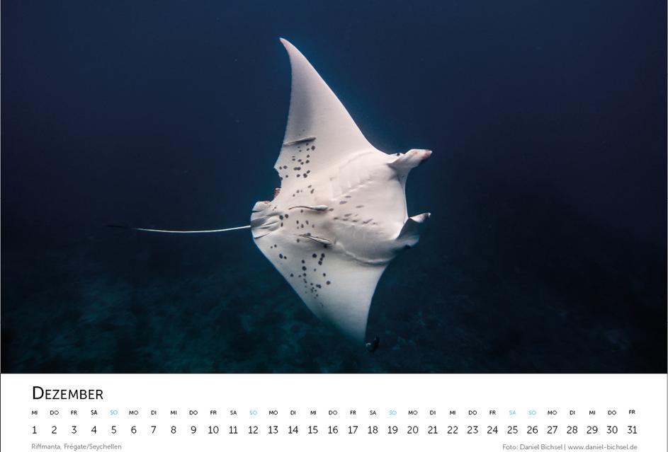 Kalender 202114.png