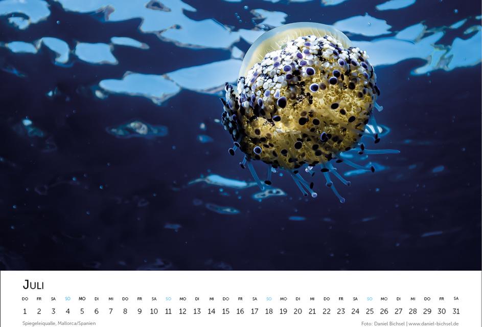 Kalender 20219.png
