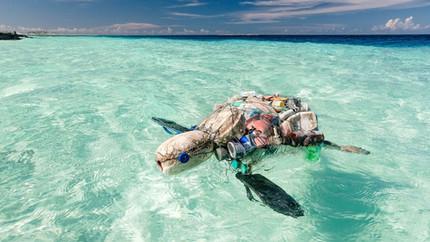 Plastik Edukation