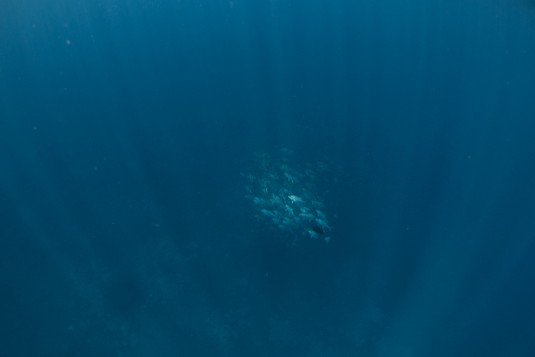 ApounterwasserweltenPhilippinenPandan235