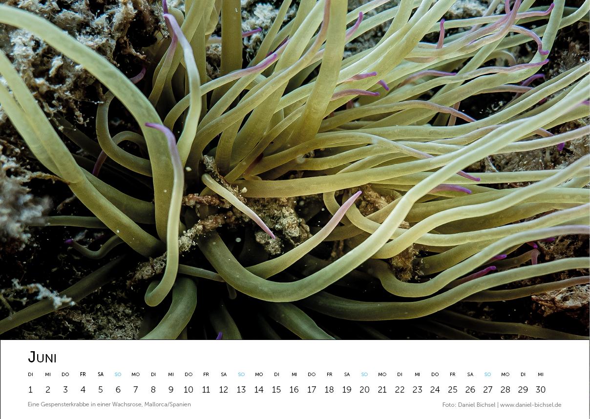 Kalender 20218.png