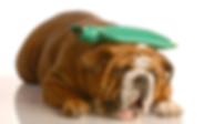 Dog with bag on head - sick dog