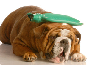How To Plan For Emergencies: Pet Insurance and Pet Savings Accounts