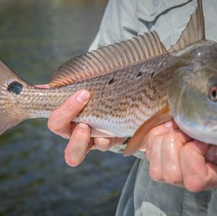 30A Charter Fishing