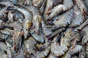 67503286-seafood-background-group-of-fre