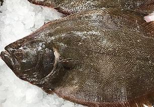 FlounderP.jpg