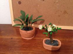 Detalle de las plantas