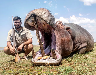 Hippo; Crocodile; Big Game Hunt; Zimbabwe; Binga; Lake Kariba Hunt; Africa