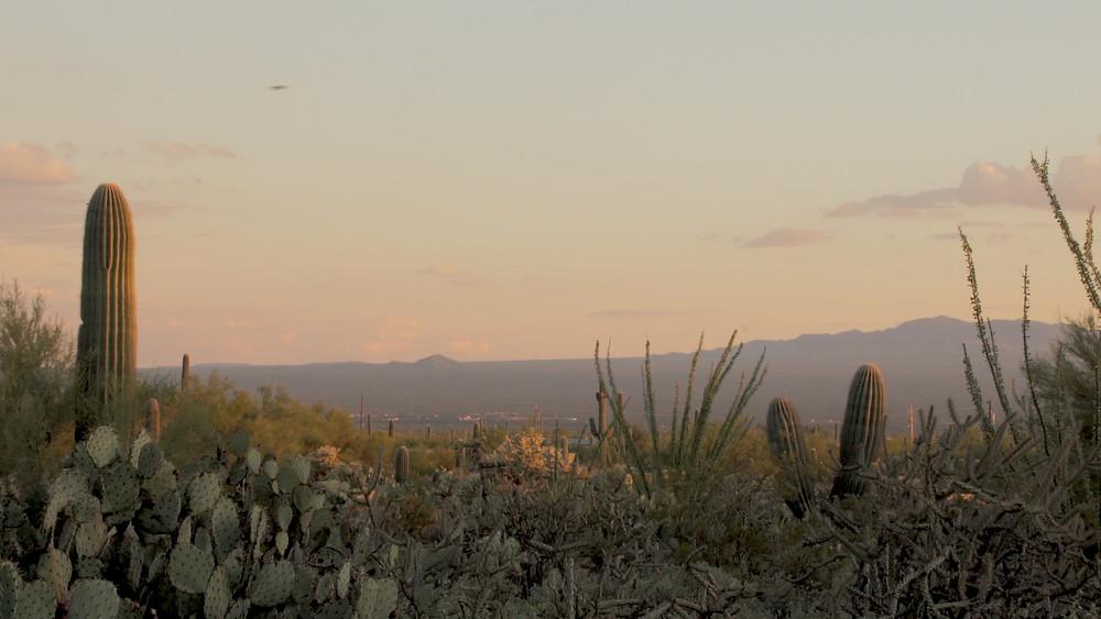 Parc National Saguaro, Arizona, États-Unis
