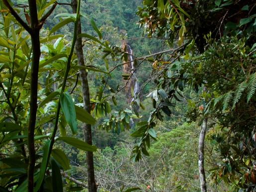 Perdus dans la jungle de Medellín
