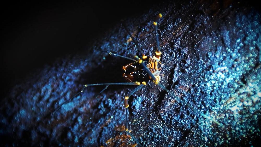 La fameuse araignée dans la forêt d'amazonie équatorienne
