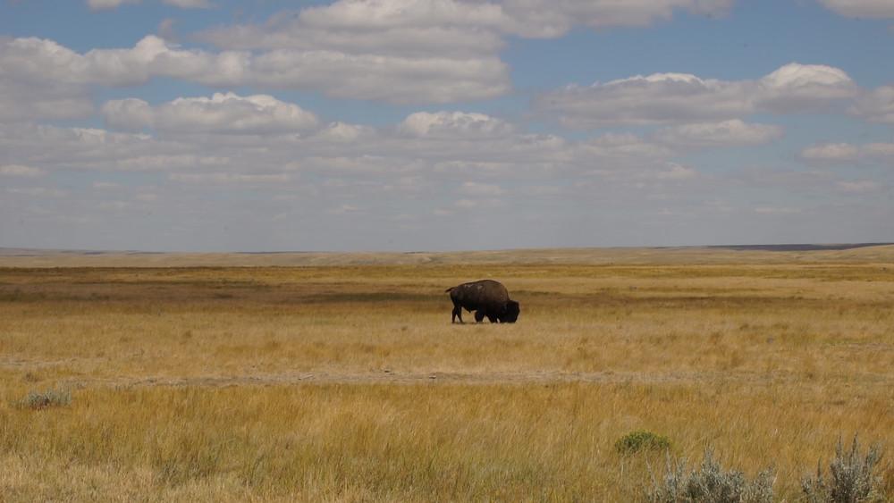 Parc National des Prairies, Saskatchewan, Canada