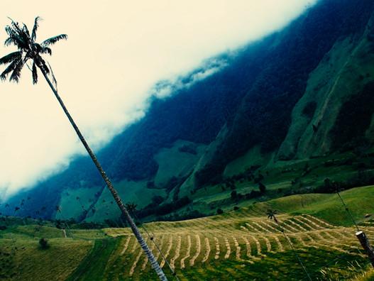 Colombie: Vallée de Cocora et le Tejo