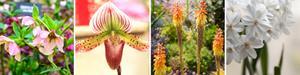 Gardening tips - 8 plants that flower in winter in Sydney, including Winter Rose, Slipper Orchid, Winter Cheer, Paperwhite Jonquils
