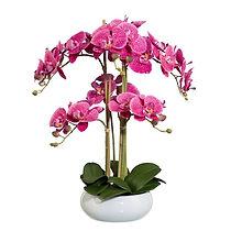 Orchidée.jpg