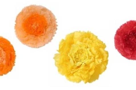 Carnation Paper Flowers