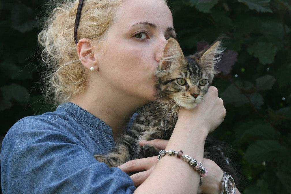 Maine Coon Kitten, black tabby