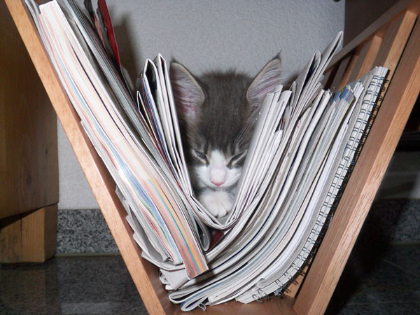 Im Zeitungsständer