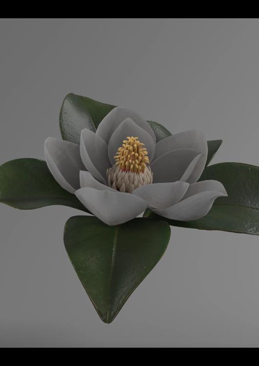 Screenshot-renderedimage_Magnolia_lookde