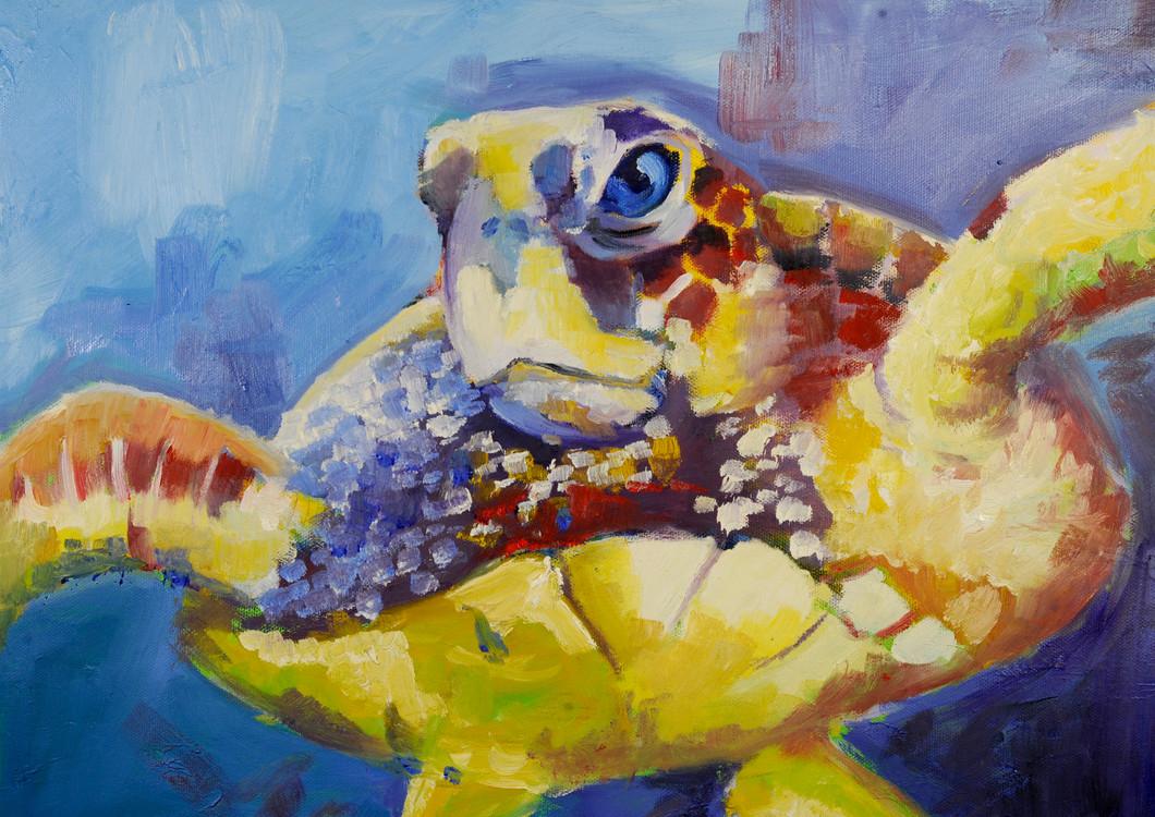 Turtle_0020.JPG