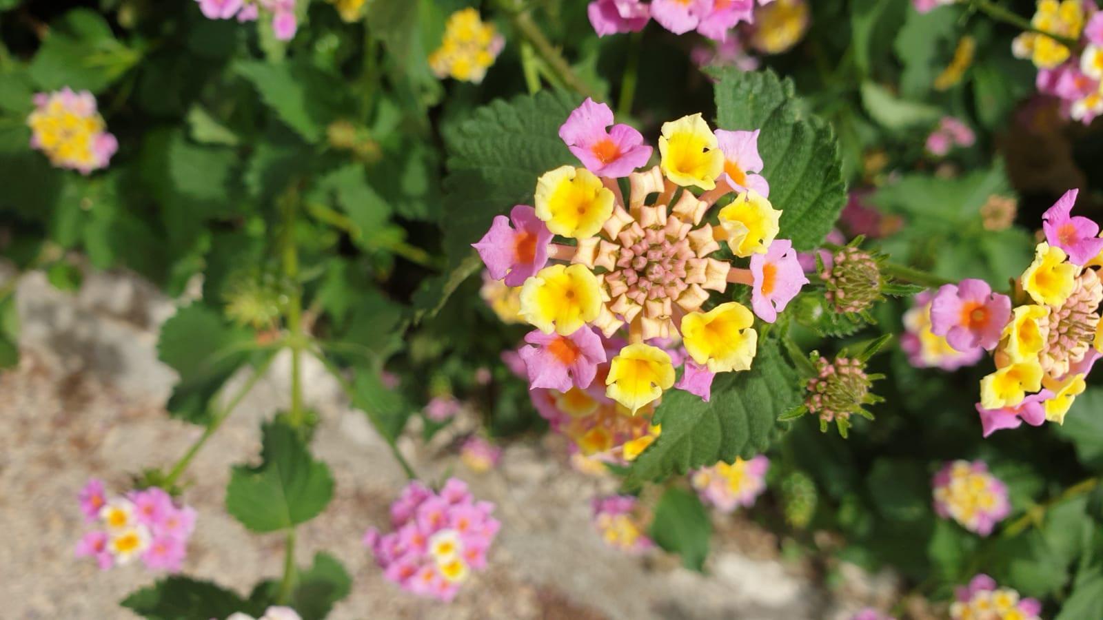 Beauty Flower Croatia