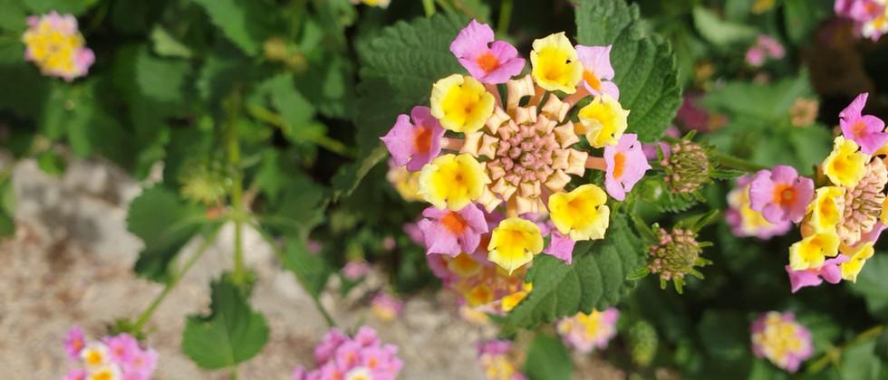 Retreat Croatia - Beauty Flower