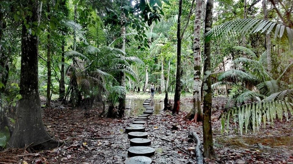 Jungle Place